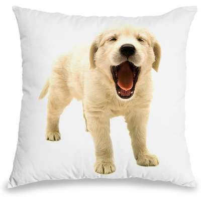 Capa para Almofada Coleção Love Dogs - Golden Retriever